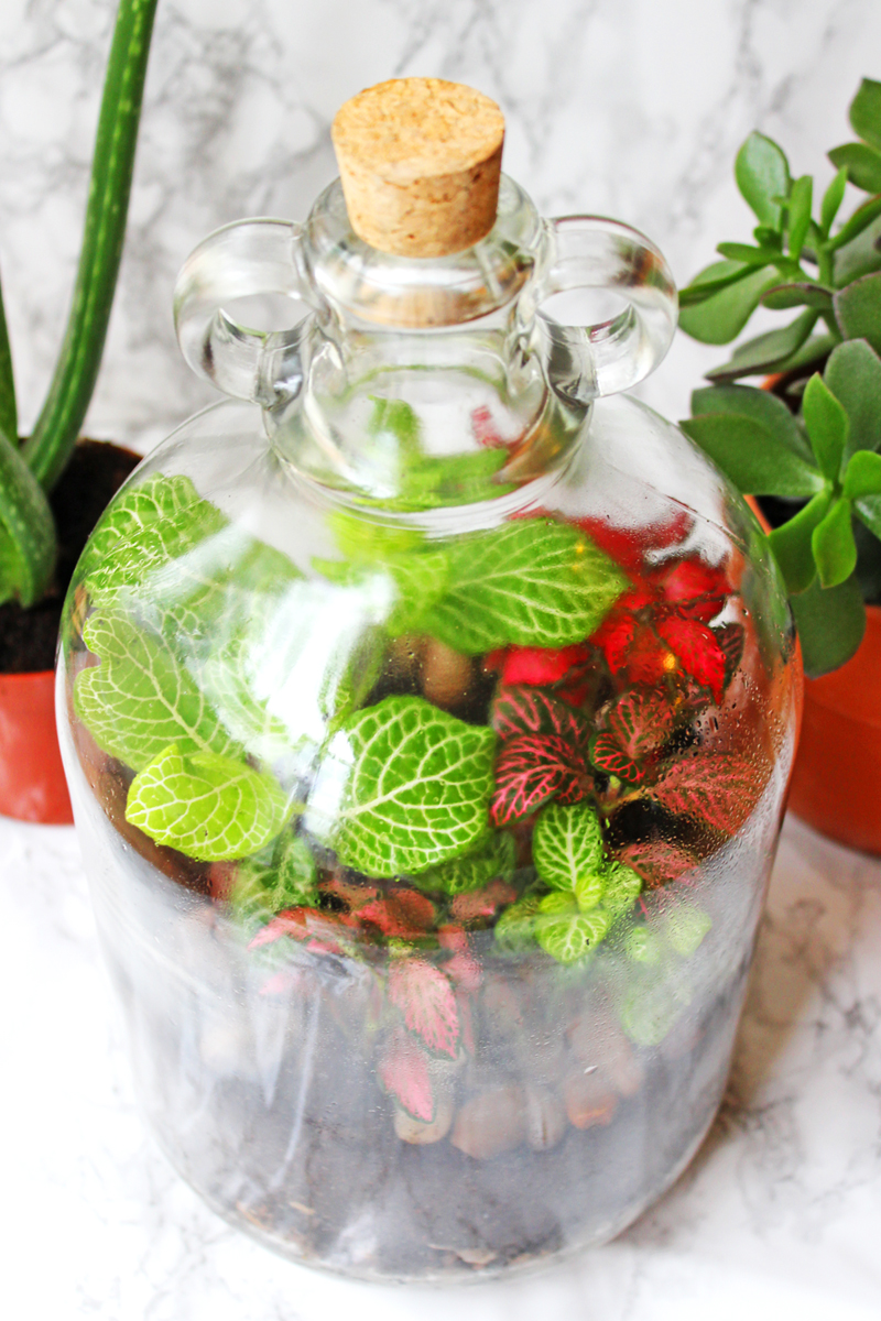 Find out just how easy it is to make a terrarium at home! Filled with moss, ferns, succulents and cacti its easier than you think to make these beautiful mini-gardens for your home.
